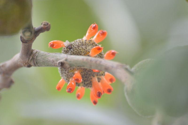 Fruit 2/2 -