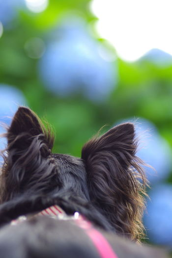 Close-up portrait of dog outdoors
