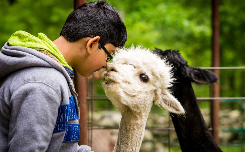 Close-up of boy with llama