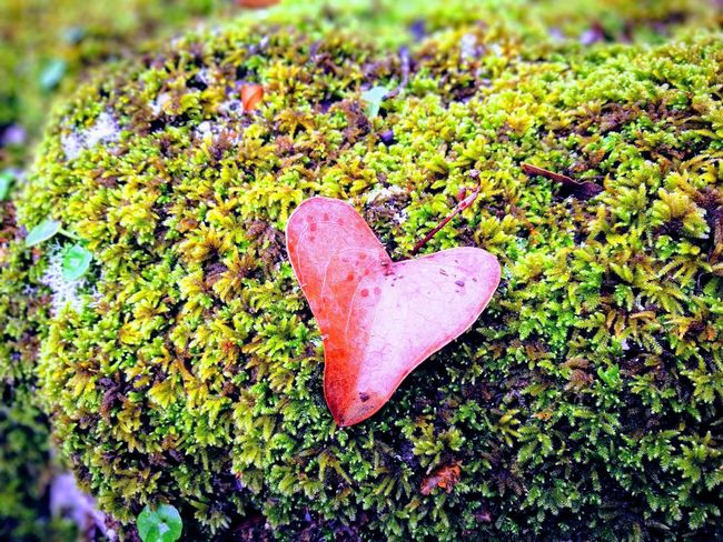 L'amore per la natura Heart Shape Love Day No People Green Color Outdoors Nature Close-up Grass Freshness