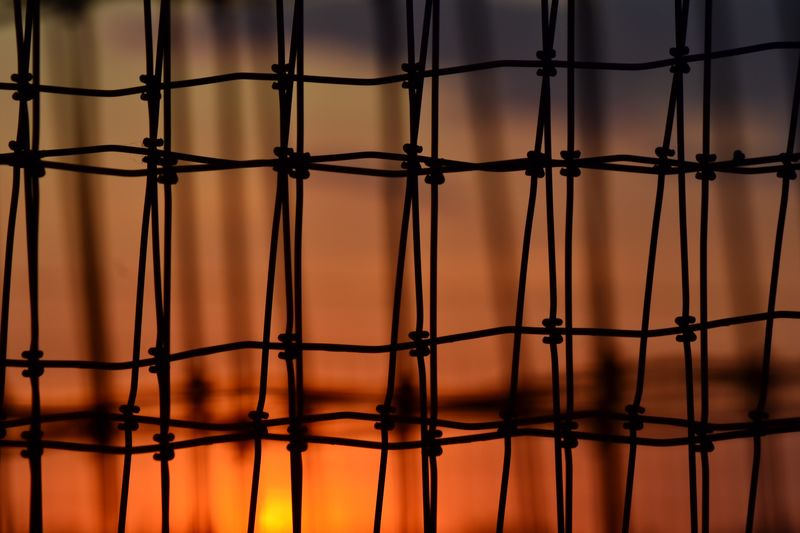 Art Is Everywhere Outdoors Sunlight Field Barbed Wire Pattern Sun
