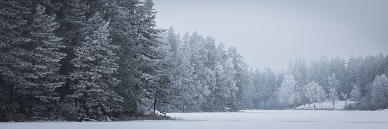 Another version of Pines in wintermist. Personally I like this version best. PWMFoto Patrik Wennerlund Beauty In Nature Cold Temperature Day Forest Frozen Landscape Nature No People Outdoors Pine Tree Scenics Sky Snow Snowing Spruce Tree Tranquil Scene Tranquility Tree Weather Winter