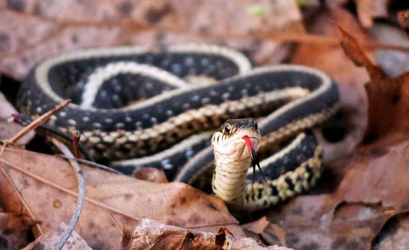 Surprise! Snake Animal Themes Animal Wildlife Animals In The Wild Close-up Nature One Animal Outdoors Reptile