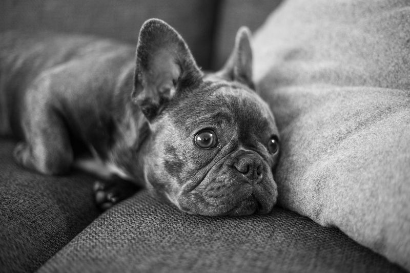Close-up of dog lying down on sofa