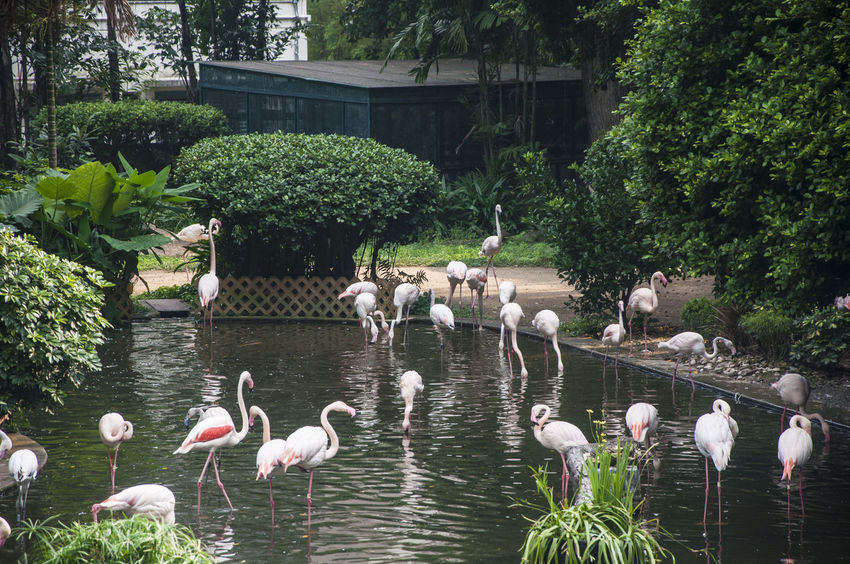 Beauty In Nature Bird Bird Photography Birds Flamingo Flamingos Nature Nature Pink Flamingos