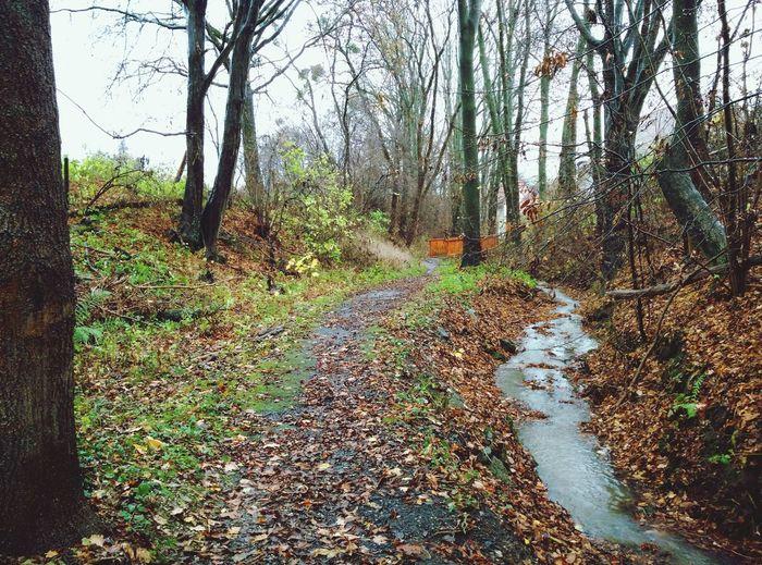 Path Rain Autumn
