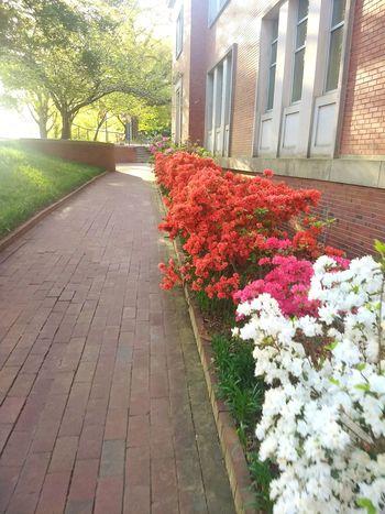 Flower City Architecture Building Exterior Built Structure Plant Pavement Blooming Petal Pollen Garden Lane In Bloom
