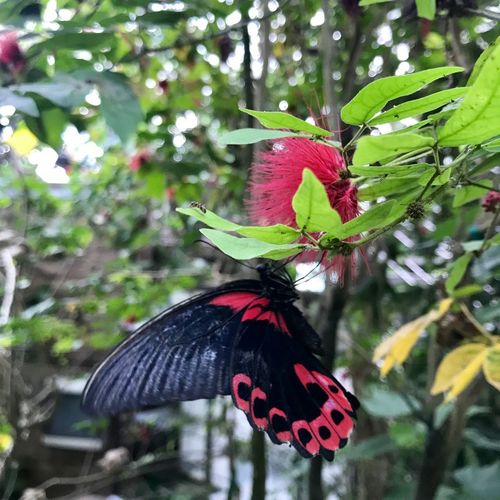 Butterfly Insect Animal Themes Animals In The Wild Plant Animal Wildlife Animal Animal Wing Invertebrate One Animal Beauty In Nature Butterfly - Insect Plant Part No People Leaf Nature