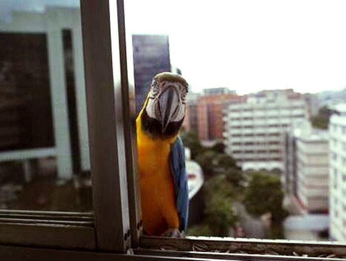Guacamayas Exotic Caracas,venezuela Caracas Birds