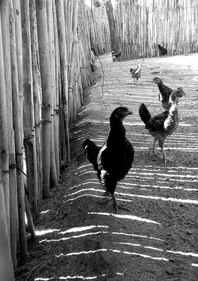 View of birds on street
