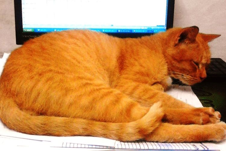 Garfield Feeling Cozy Enjoyinglife  Keyboard Bed Easylife Mypetisbetterthanyours