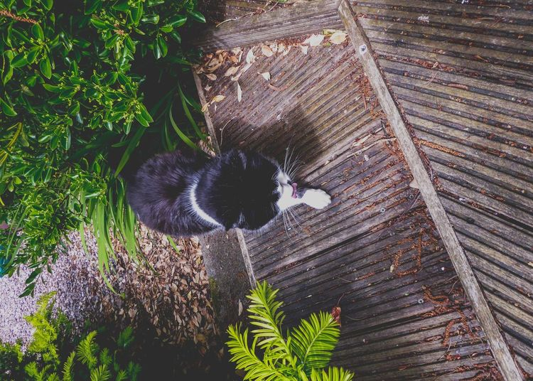 View From Above Decking Garden Domestic Cat Black And White Cat Domestic Shorthair Cat Cat Senior Cat Plant No People Growth Nature Day Leaf Animal Plant Part Animal Themes Outdoors Full Frame One Animal Pattern Textured  Architecture Backgrounds