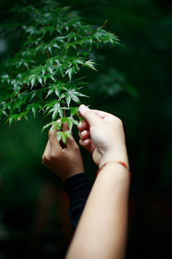 Cropped hands holding plants