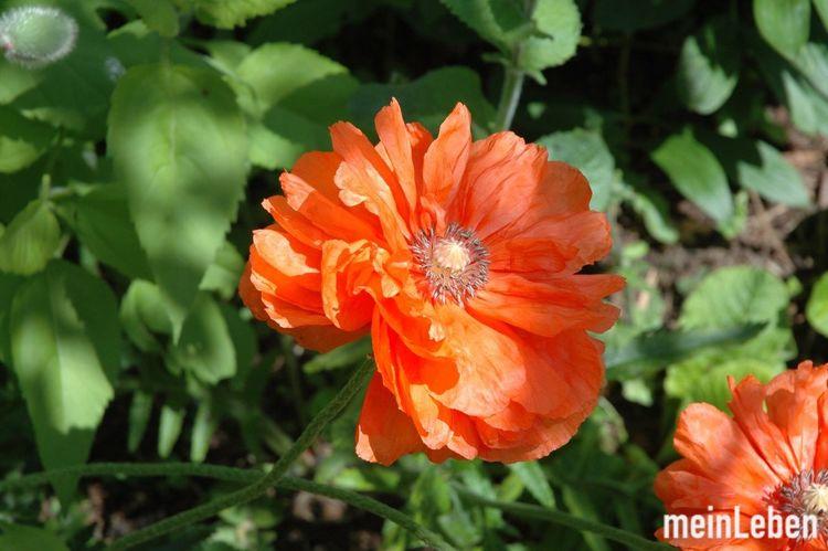 FlowerPower Flowers EyeEm Nature Lover Hello World Summer