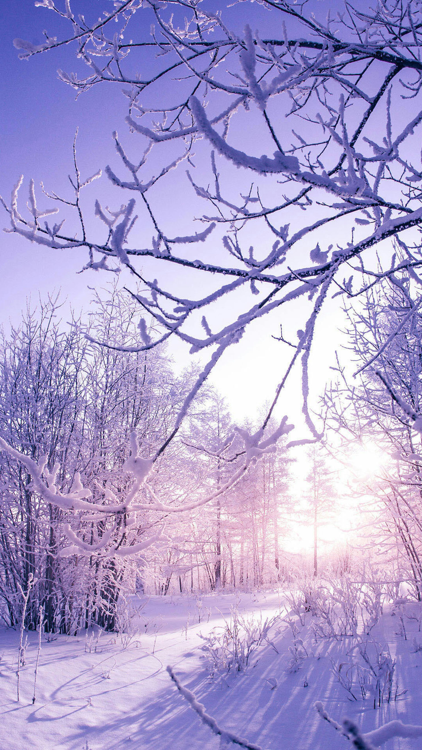 tree, snow, cold temperature, winter, nature, bare tree, no people, branch, sky, outdoors, tranquility, beauty in nature, growth, scenics, tranquil scene, day