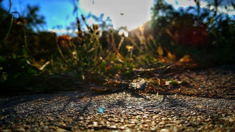 Zdjęcianiespodziewane Huawei Polska Niebo Niebieski Blue Blue Sky Green Color Green Chodnik Tree Sunlight Sky Grass Close-up Landscape Plant Calm Growing