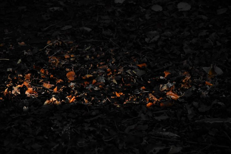 Fire Burning Fire - Natural Phenomenon Nature Flame No People Heat - Temperature High Angle View Orange Color Outdoors Glowing Land Field Close-up Day Leaf Wood
