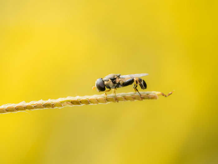 Close-up of bee on yellow leaf