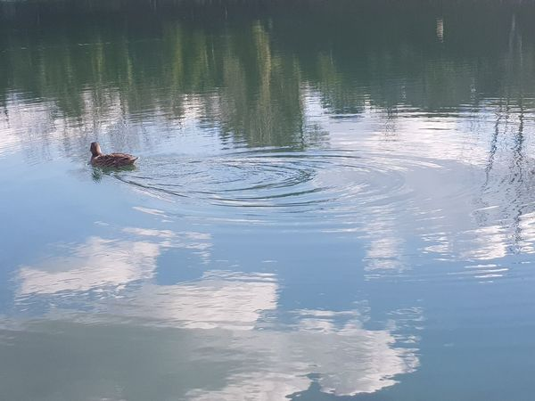 Clouds Clouds Reflections On Water Sunny Day Illumination Duck Artificial Lake Nature Riflection Water Reflection Lake Outdoors Nature Day One Person