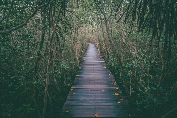 the way me select. Bamboo - Plant Beauty In Nature Boardwalk Day Diminishing Perspective Direction Footpath Forest Growth Land Long Nature No People Non-urban Scene Outdoors Plant Scenics - Nature The Way Forward Tranquil Scene Tranquility Tree Wood Wood - Material Wood Paneling WoodLand