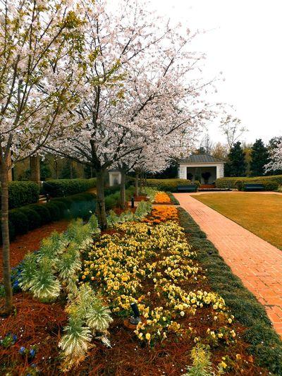 Flowers,Plants & Garden Designed Garden Garden House Flowering Trees Flowers, Nature And Beauty Plants And Flowers Gardens City Garden Home And Garden