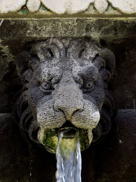 The King and his Lady Bug: who's petrified? Animal Head  Animal Head  Bearded Close-up Creativity Day Fountain Fountain_collection Ladybird Ladybirds 🐞 Ladybug Ladybug🐞 Lion Lion Head Lion Head Wall Fountain Lion King  Mane Nature Outdoors Petrified Place De Vosges Portrait Roaring Sculpture Statue