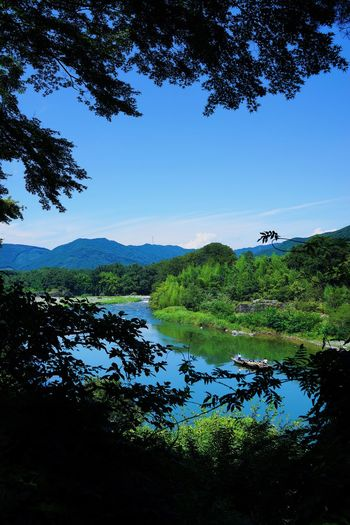 長瀞渓流下り Plant