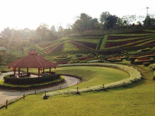 Doi Mae Salong Mae Salong Chiang Rai Up Mountain Mountain View Fresh Morning Garden View Vocation