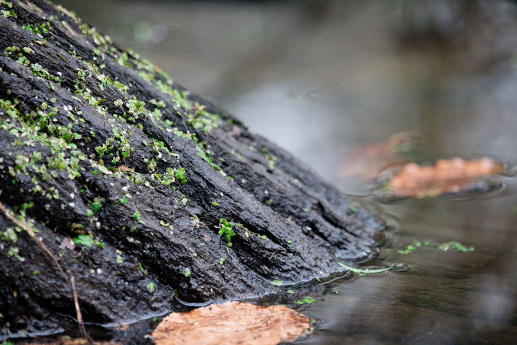 Close-up of moss growing on wet wood at lake