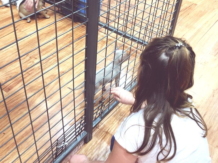 High Angle View Of Girl Playing On Cat In Cage