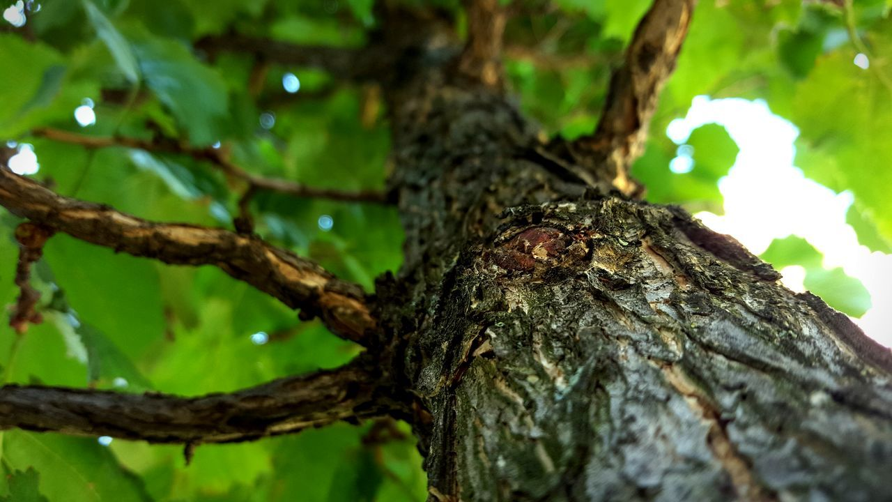 tree trunk, tree, nature, one animal, close-up, focus on foreground, animals in the wild, animal themes, insect, textured, day, no people, outdoors, branch, growth, animal wildlife, wood - material, bark, beauty in nature