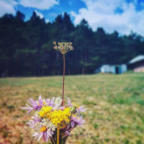 Flower Outdoors Nature Focus On Foreground Flower Head Day Wildflower Meadow Uncultivated Plant Rural Scene Summer Beauty In Nature No People Growth Close-up Fragility Sky Freshness Grass No People No Troubles Camp Colored Background