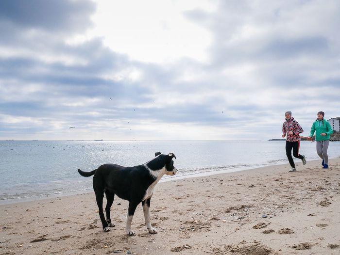 Full length of dog on beach