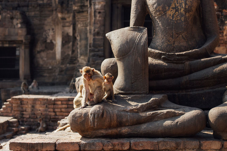 Ancient Buddha Buddha Temple Historical Building Monkey Family Monkeys Mother And Son Ruins Ancient Architecture Ancient Civilization Animal Themes Animals In The Wild Architecture Baby Monkey Buddha Statue Family Time History Lopburi Mammal Nature Religion Religion And Beliefs Sitting Statue Temple Summer Exploratorium