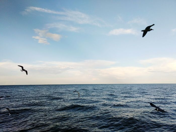 Bird Flying Sea Animals In The Wild Animal Themes Animal Nature Horizon Over Water Sunset Water Beauty In Nature Spread Wings Sky Fish Texas Kemah, Texas Kemah Boardwalk Blue Cloud - Sky Beauty In Nature Nature Travel Seagull Seagulls In Flight Seagulls