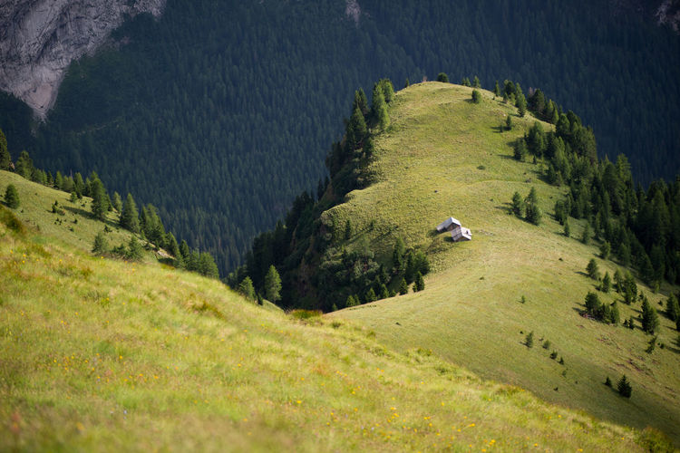 High angle view of horse on mountain