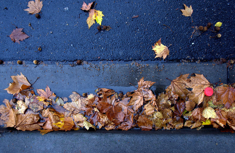 High Angle View Of Wet Dry Autumn Leaves Fallen On Street