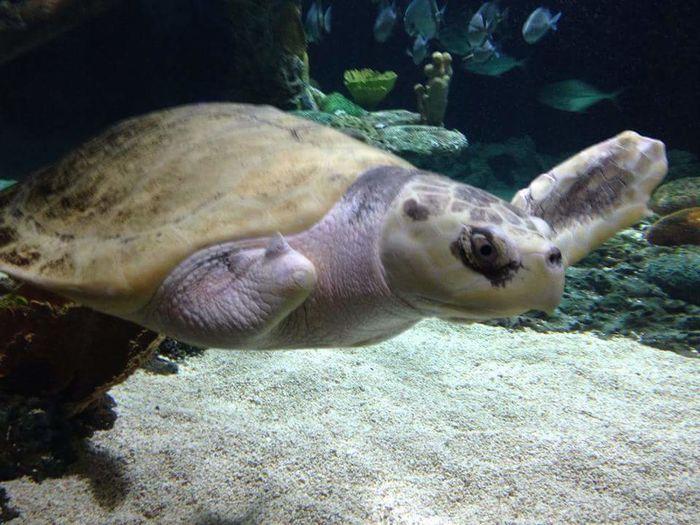 Nature's Diversities Check This Out Taking Photos Hello World Cheese! Hi! Enjoying Life Sealife Sealifeaquarium Turtle 🐢 Turtle Love