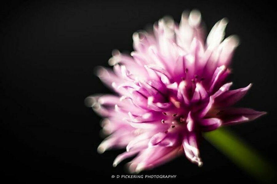 Glow... Flowers Flowerporn Flower Collection Macro_collection EyeEm Nature Lover EyeEm Best Shots EyeEm Best Edits