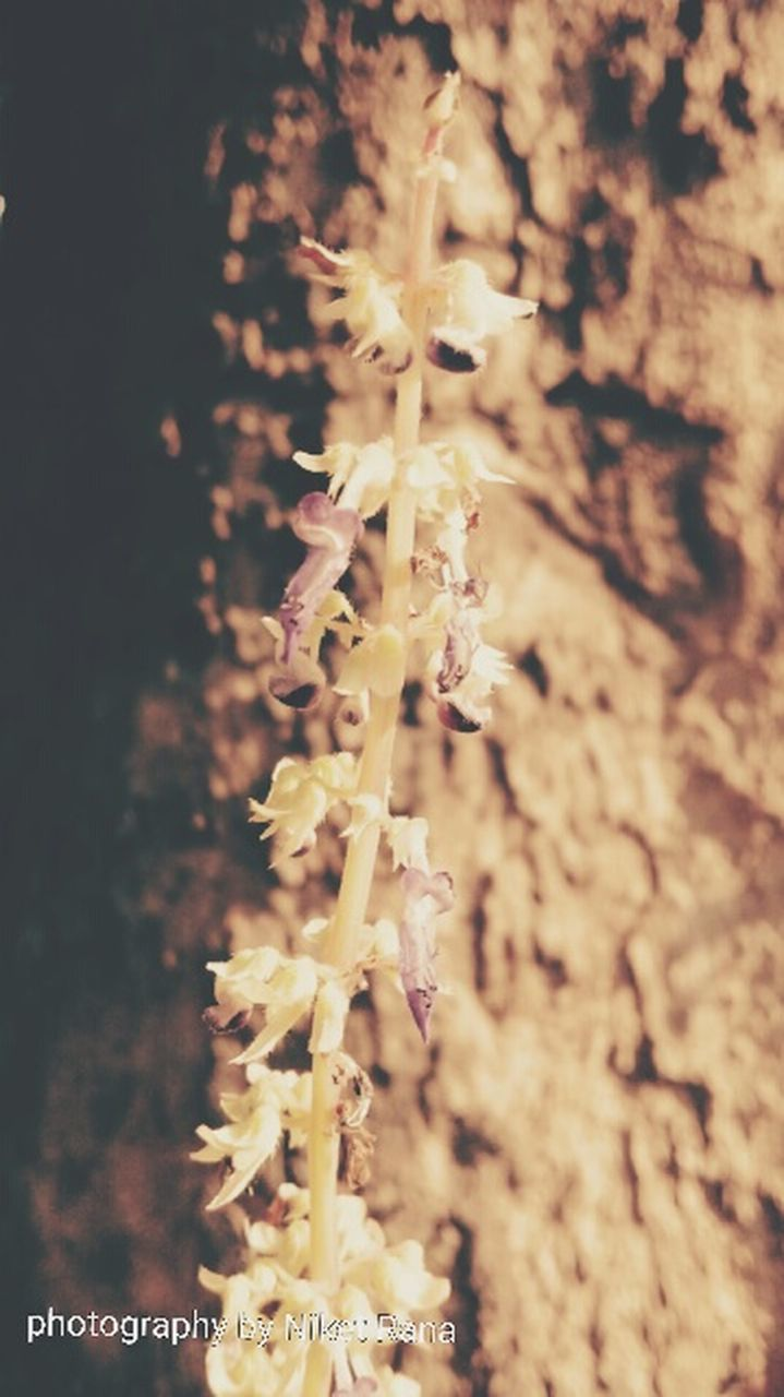 nature, growth, plant, no people, close-up, outdoors, beauty in nature, day, freshness