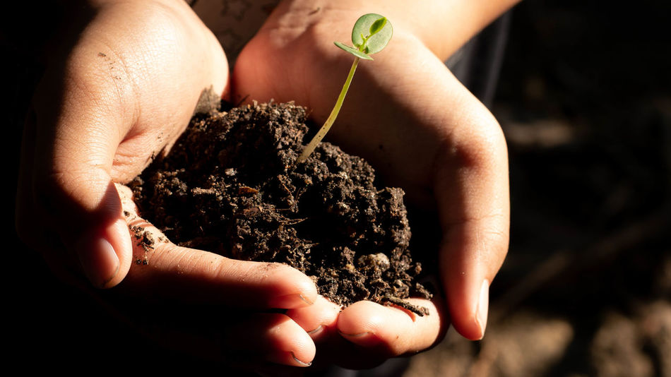 Nature Nature Photography Tree Beginnings Care Close-up Environment Environmental Conservation Finger Gardening Growth Hand Hands Cupped Holding Human Body Part Human Hand Nature Nature_collection One Person Pollution Protection Save Nature  Save Nature Concept Seedling Small