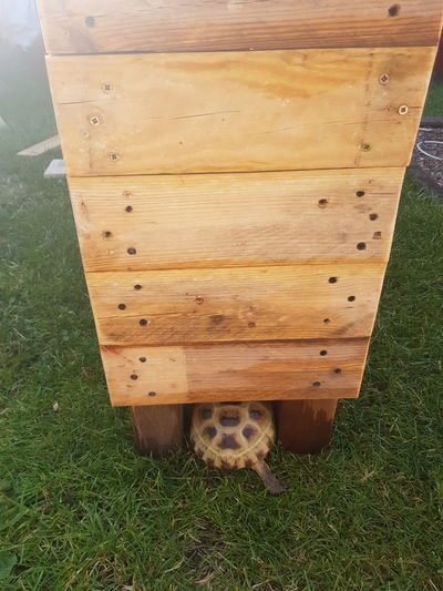 Exploring Fun In The Sun Hiding Leg Woof Grass Green Reclaimed Recycled Dizzi Izzi My Pet Love Summer Weathet Hot Shelter Legs Cute Wood - Material High Angle View Grass Grass Area Tortoise Wooden Growing Animal Shell Plank Post Slow Reptile Tortoise Shell Turtle Grazing