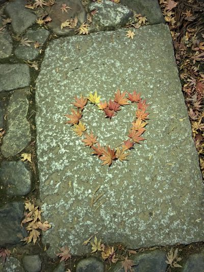 Autumn Beauty In Nature Day Heart Shape Leaf Love Love Love Love.♥♥♥ Nature No People Outdoors Tree