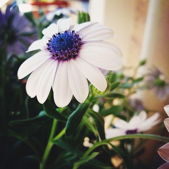 Flower Flower Noedit Nature Fiore Purple Purple Flower White