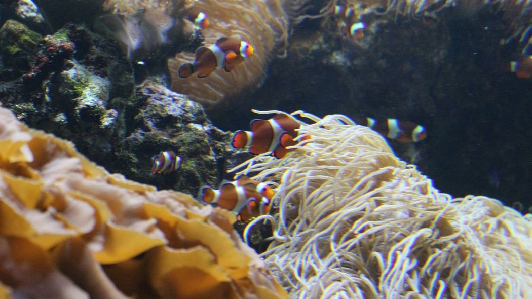 Vancouver Aquarium Fish Clownfish Aquarium Here Fishy Fishy Canada