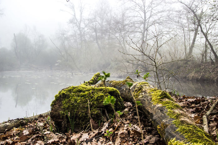 Beauty In Nature Fog Foggy Landscape Leaves Nature Nature Reserve No People Outdoors Rainy Days Reflection Reflection On Water Reflex Relaxing River Scenics Sky Social Issues Ticino Tree Tree Water Winter