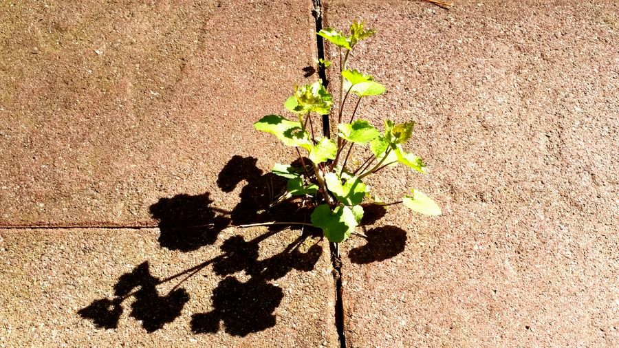 conquering living space Plant Eyeem Plants Stone Light And Shadow Taking Pictures Sunny Survival Tadaa Community A New Beginning