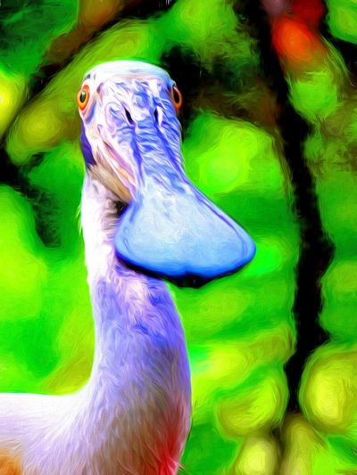 rescued SPOONBILL DbJR Animal Themes Animals In The Wild Beauty In Nature Bird Bird Photography Close-up Flamingo Gardns Florida Nature One Animal Outdoors Rescued Spoon Bills Birds EyeEmNewHere Live For The Story