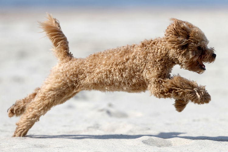 Side view of dog running on land