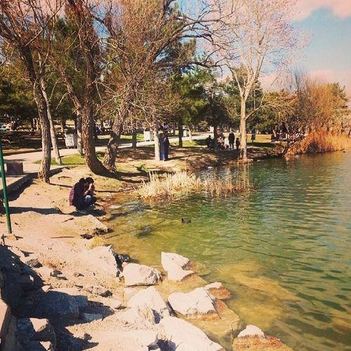 7 yıldan sonra ilk kez geleneğe dönüş yaptık :) Lake Duck Göl Ordek picoftheday pictureoftheday animal throwbacksunday secimhatirasi